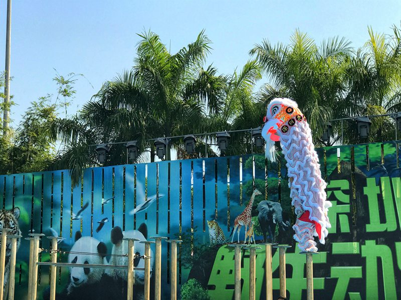 柳州春节动物园舞狮表演
